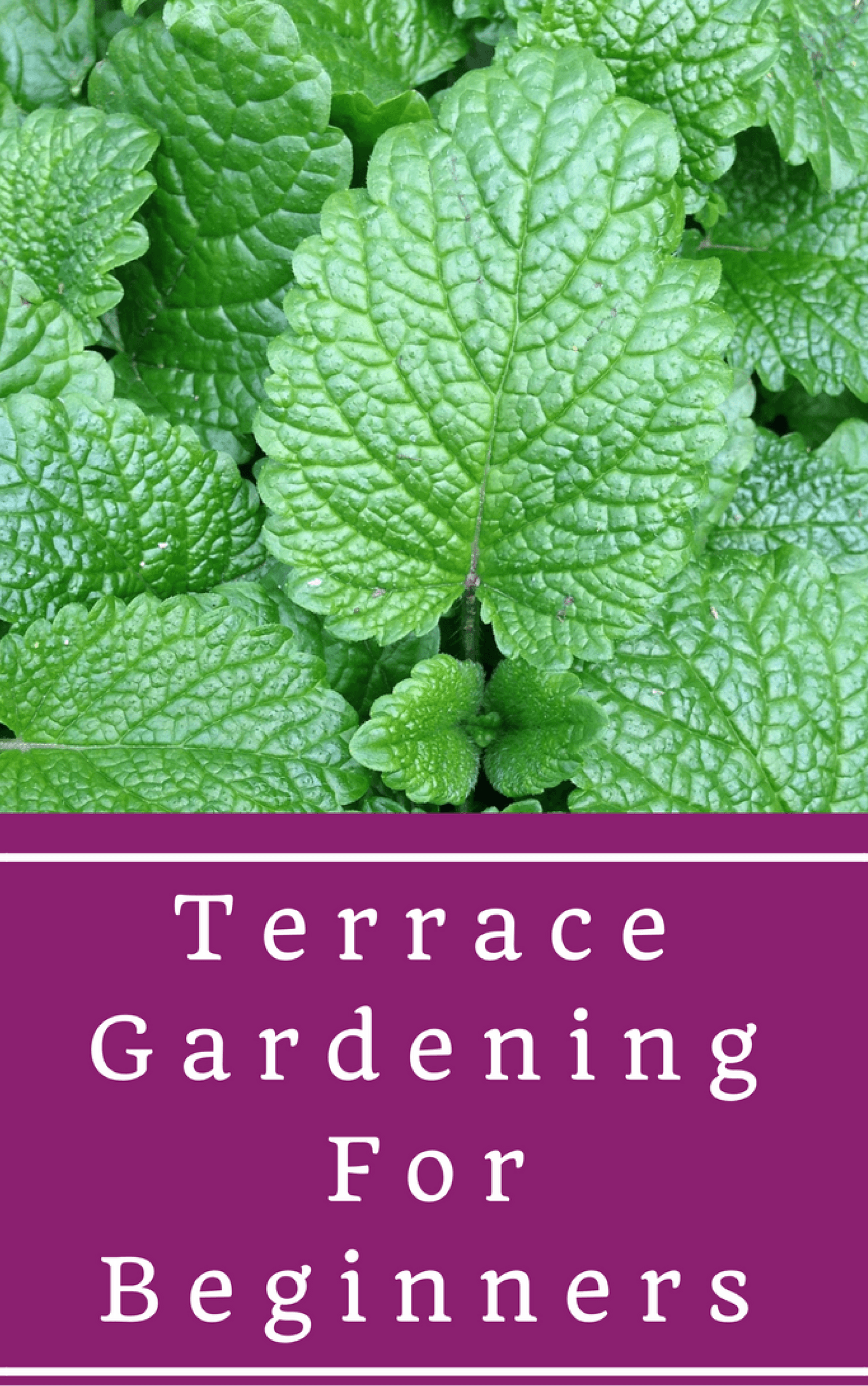 Terrace Gardening For Beginners The Step By Step Guide