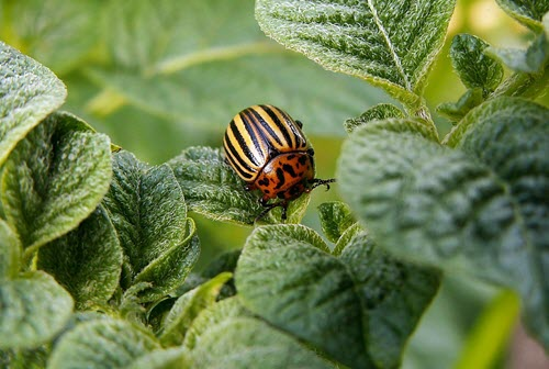 Common Gardening Mistakes To Avoid - pests