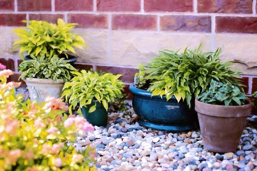 Common Gardening Mistakes To Avoid - too many small pots