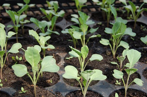 Common Gardening Mistakes To Avoid when to plant