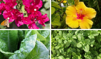 20 Plants For Beginners to Grow in Their Terrace Garden - MOG