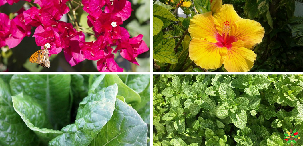 20 Plants For Beginners To Grow In Their Terrace Garden